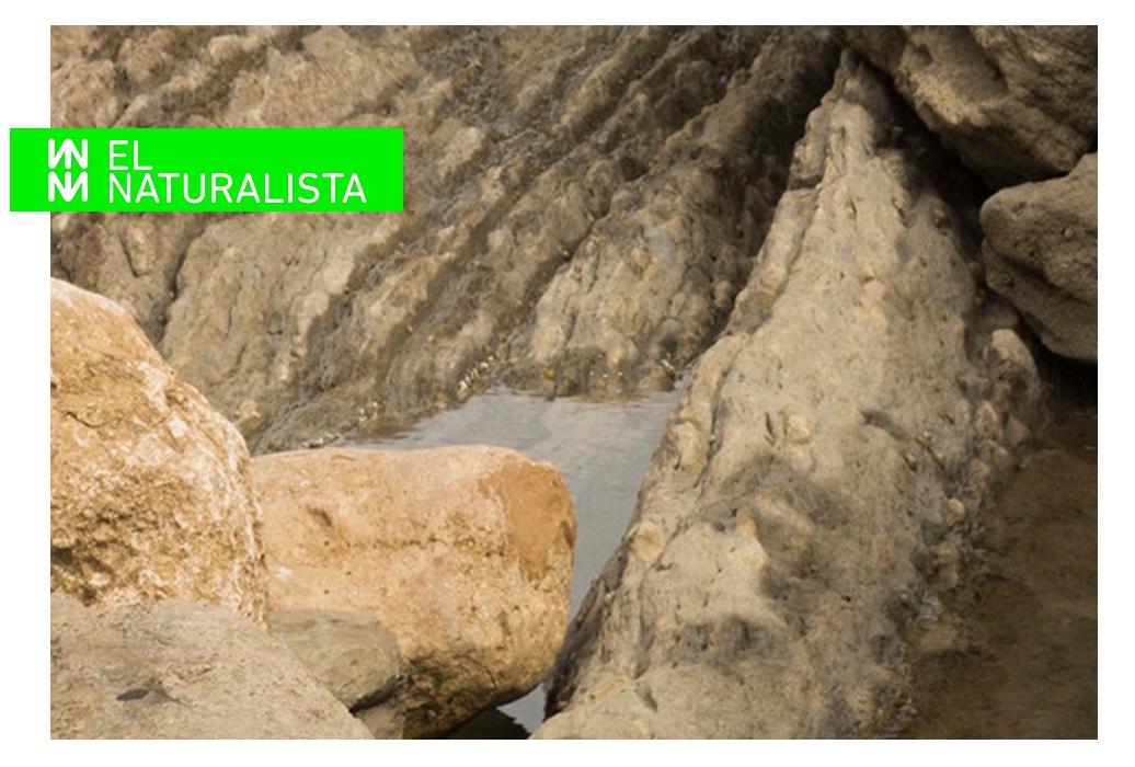 NEU | Neue Modelle von EL NATURALISTA